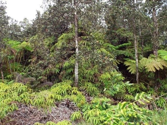Liona St, Volcano, HI 96785 (MLS #651205) :: LUVA Real Estate