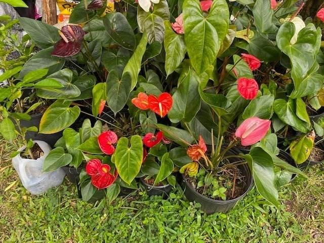 https://bt-photos.global.ssl.fastly.net/hawaii/orig_boomver_1_651434-2.jpg