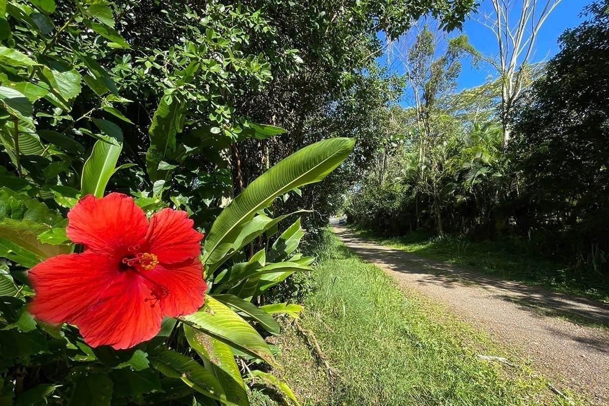 https://bt-photos.global.ssl.fastly.net/hawaii/orig_boomver_1_651592-2.jpg
