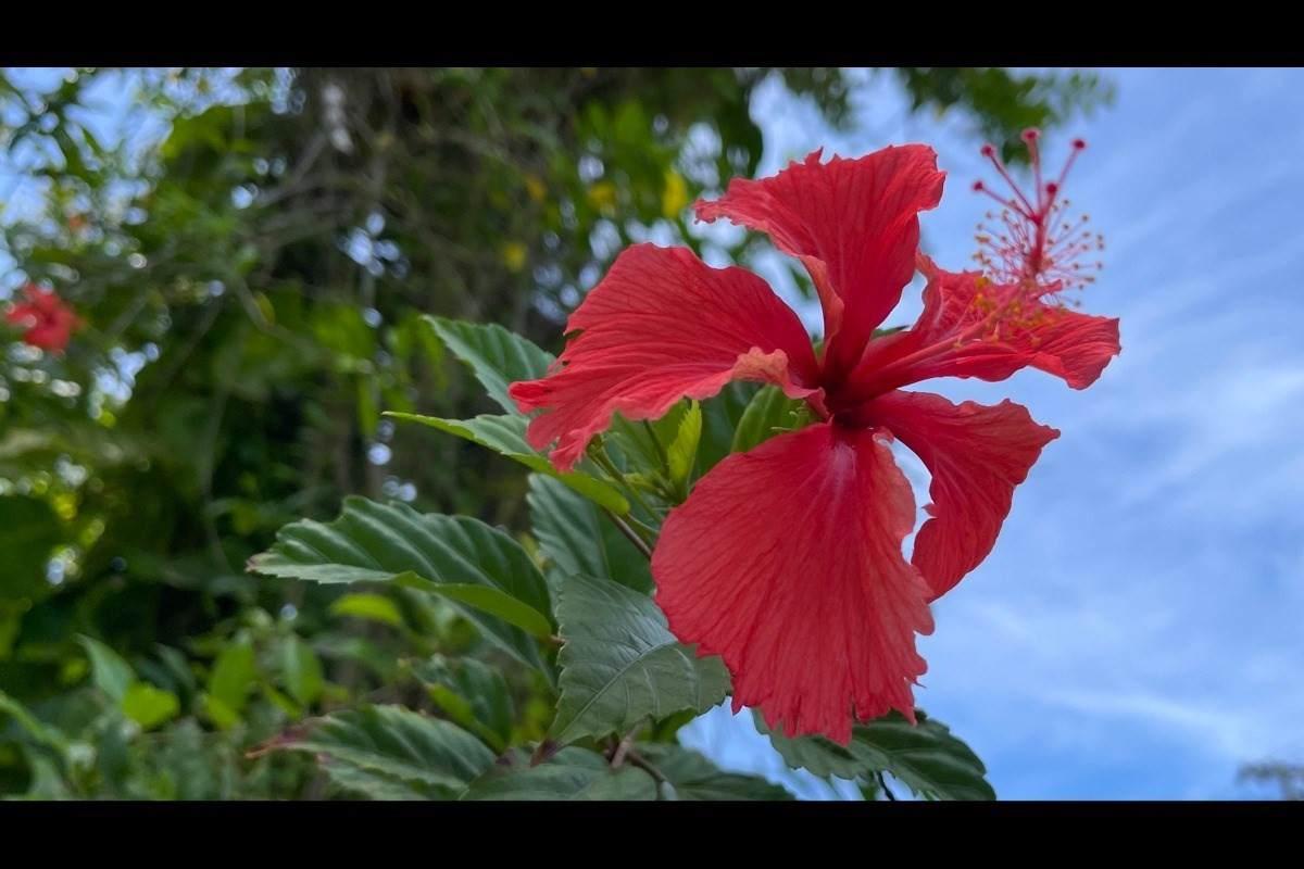 https://bt-photos.global.ssl.fastly.net/hawaii/orig_boomver_1_651681-2.jpg