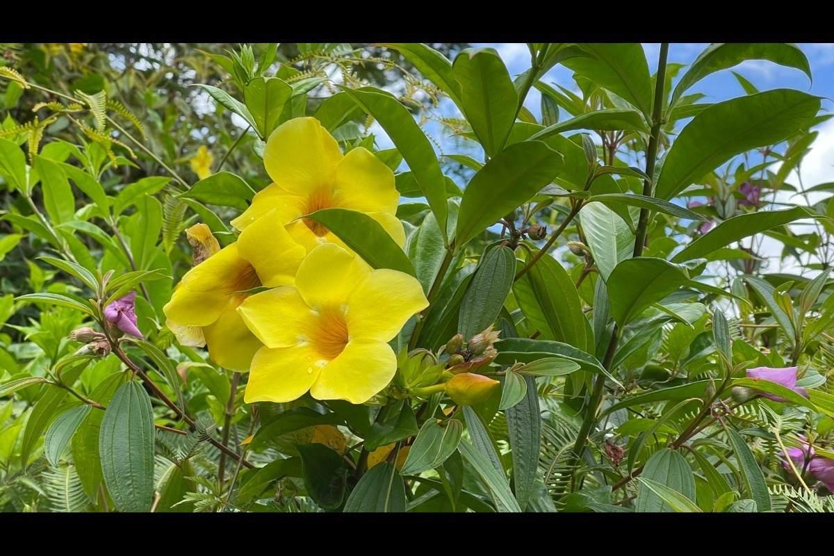 https://bt-photos.global.ssl.fastly.net/hawaii/orig_boomver_1_651974-2.jpg
