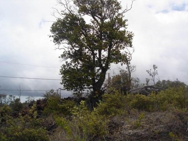 Plumeria Ln - Photo 1
