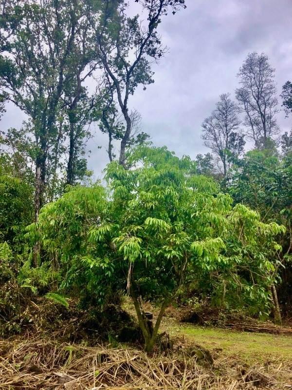 https://bt-photos.global.ssl.fastly.net/hawaii/orig_boomver_1_652176-2.jpg