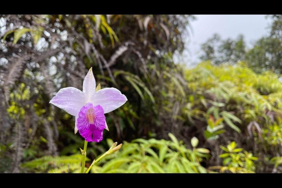 https://bt-photos.global.ssl.fastly.net/hawaii/orig_boomver_1_652206-2.jpg