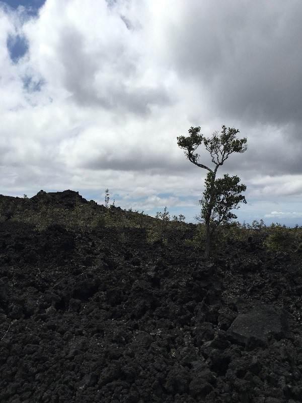 https://bt-photos.global.ssl.fastly.net/hawaii/orig_boomver_1_652322-2.jpg