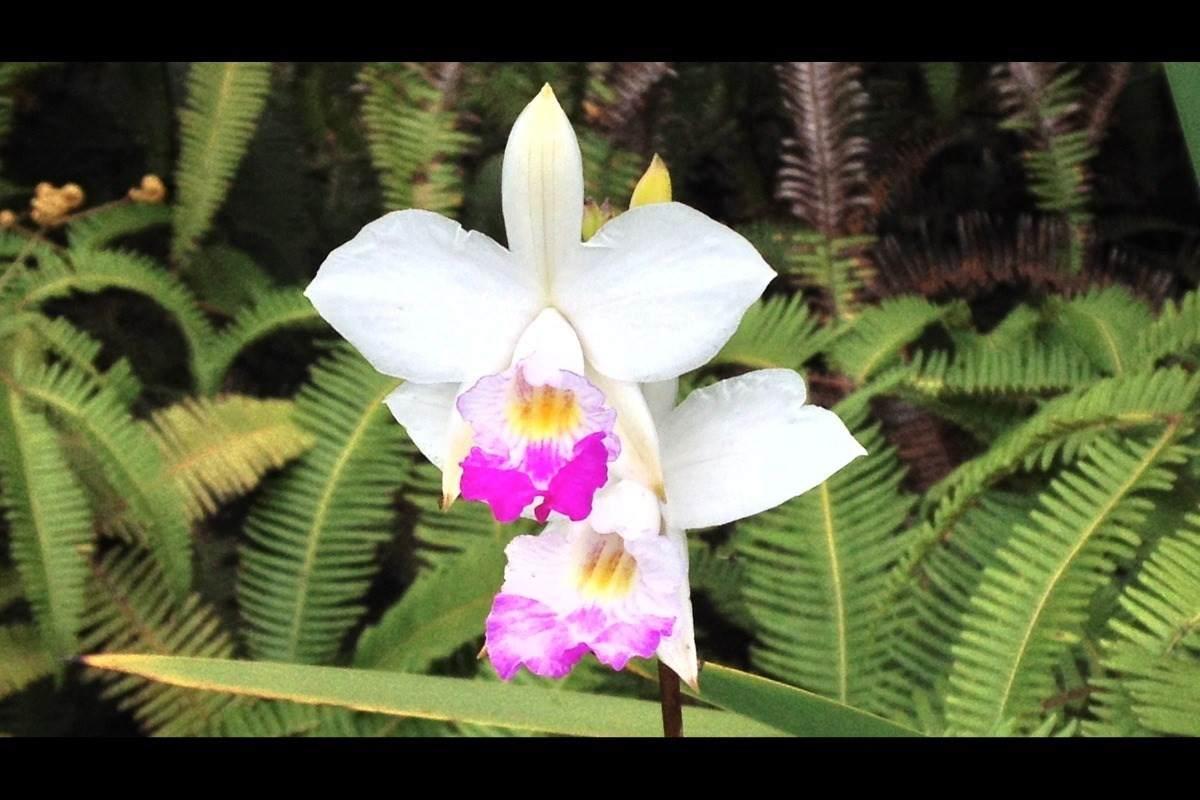 https://bt-photos.global.ssl.fastly.net/hawaii/orig_boomver_1_652412-2.jpg
