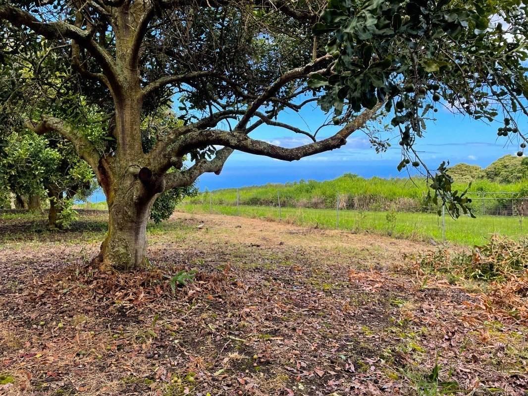 89-995 Hawaii Belt Rd - Photo 1