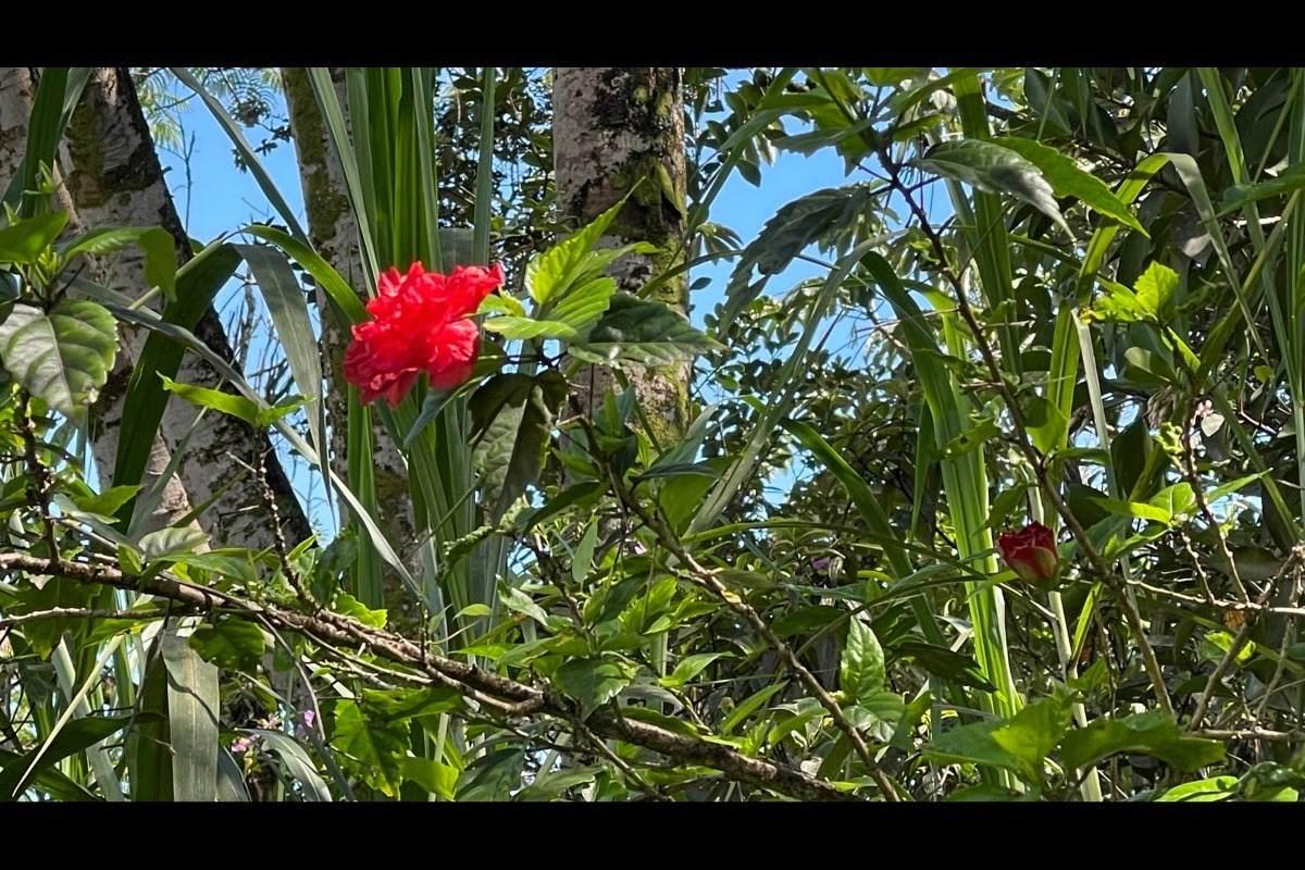 https://bt-photos.global.ssl.fastly.net/hawaii/orig_boomver_1_652806-2.jpg