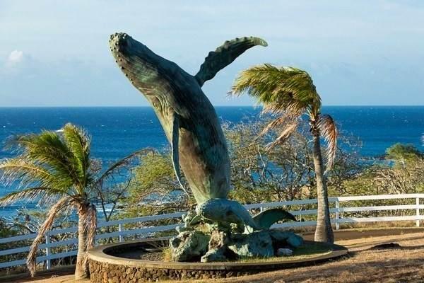 Puakea Dr, Hawi, HI 96719 (MLS #653897) :: Corcoran Pacific Properties