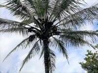 https://bt-photos.global.ssl.fastly.net/hawaii/orig_boomver_1_653990-2.jpg