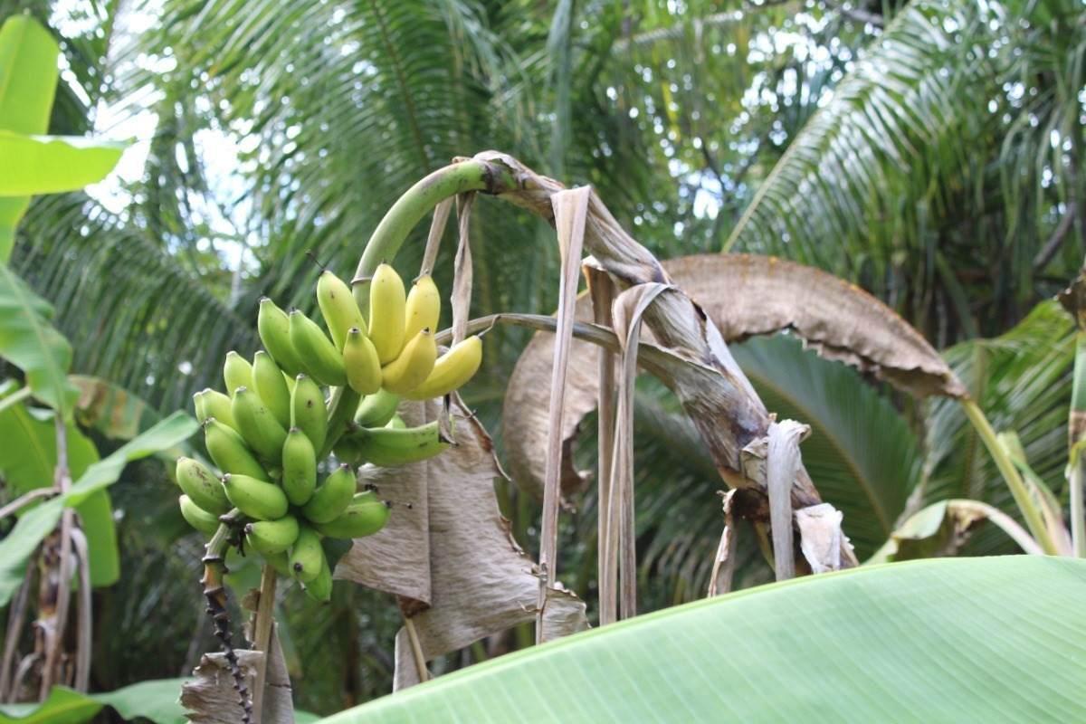https://bt-photos.global.ssl.fastly.net/hawaii/orig_boomver_1_654045-2.jpg