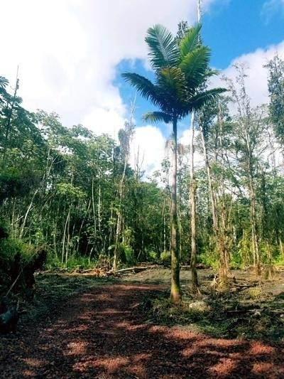 Lehua Rd, Pahoa, HI 96778 (MLS #654968) :: Aloha Kona Realty, Inc.