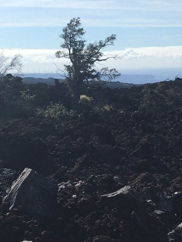 Hibiscus Dr, Ocean View, HI 96737 (MLS #655236) :: Corcoran Pacific Properties
