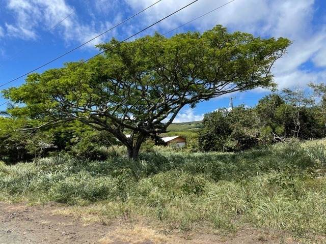 Address Not Published, Naalehu, HI 96772 (MLS #655292) :: LUVA Real Estate