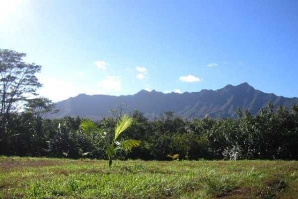 5835 Kahiliholo Rd, Kilauea, HI 96754 (MLS #625022) :: Elite Pacific Properties