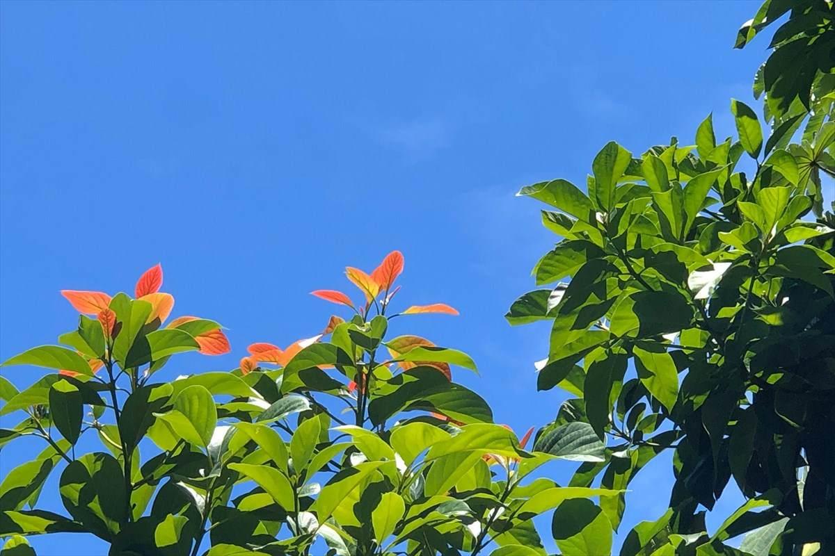 https://bt-photos.global.ssl.fastly.net/hawaii/orig_boomver_2_630250-2.jpg