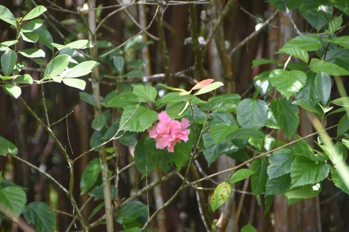https://bt-photos.global.ssl.fastly.net/hawaii/orig_boomver_1_638856-2.jpg