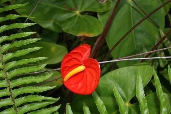 Kaleponi Dr, Volcano, HI 96785 (MLS #648236) :: Aloha Kona Realty, Inc.