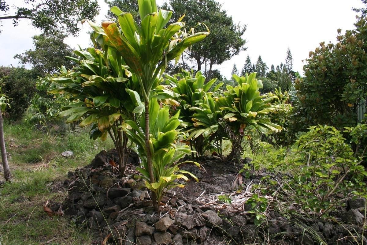https://bt-photos.global.ssl.fastly.net/hawaii/orig_boomver_2_648833-2.jpg