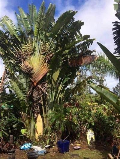 https://bt-photos.global.ssl.fastly.net/hawaii/orig_boomver_2_651177-2.jpg
