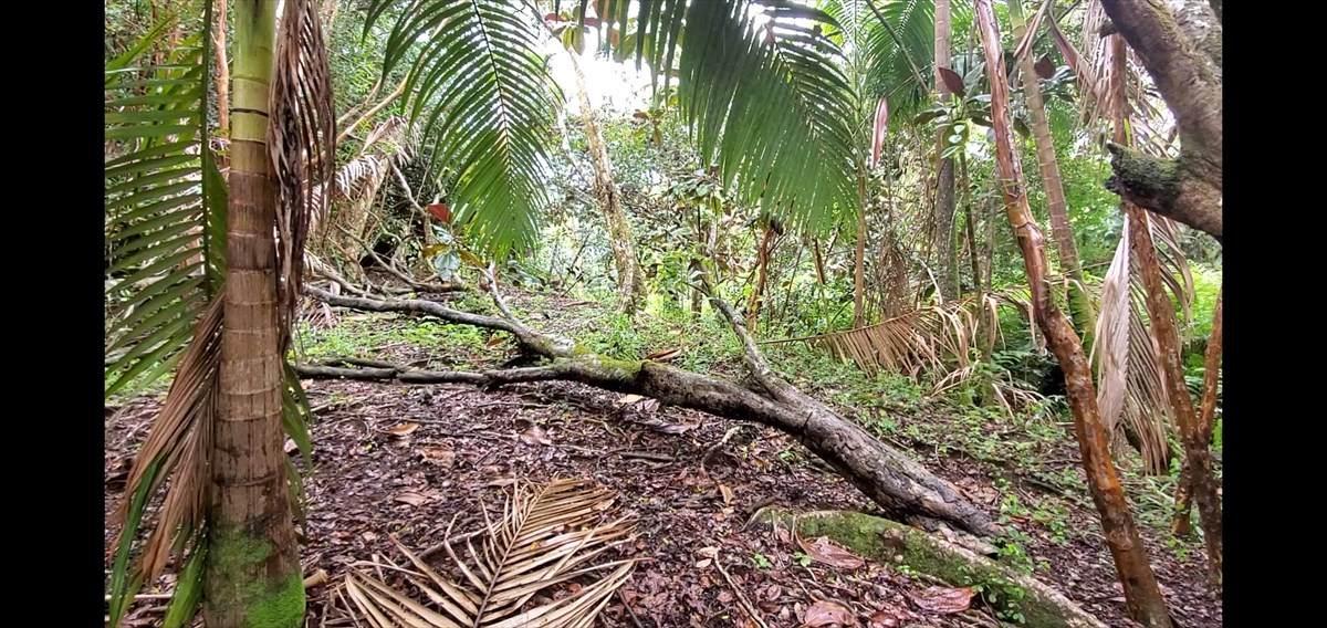 https://bt-photos.global.ssl.fastly.net/hawaii/orig_boomver_3_642005-2.jpg