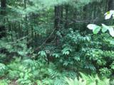 Lt 12 Woodsy Pine Trail - Photo 8