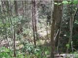 Lot 2REV Panther Ridge Road - Photo 5
