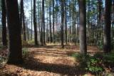 4 Pine Forest - Photo 8