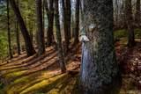 157 Woods Mountain Trail - Photo 17