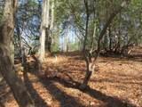 Lot 24 Woods Mountain Trail - Photo 3