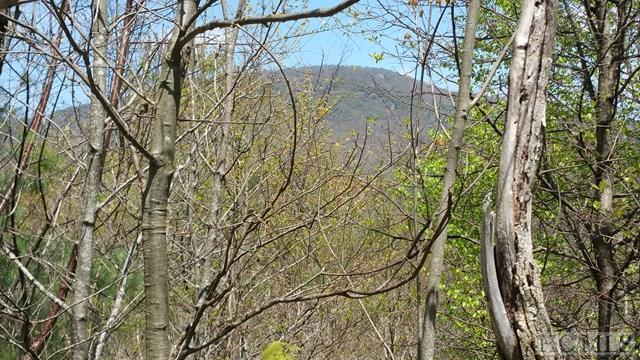Lot 33 Flyaway Circle, Cashiers, NC 28717 (MLS #88918) :: Berkshire Hathaway HomeServices Meadows Mountain Realty