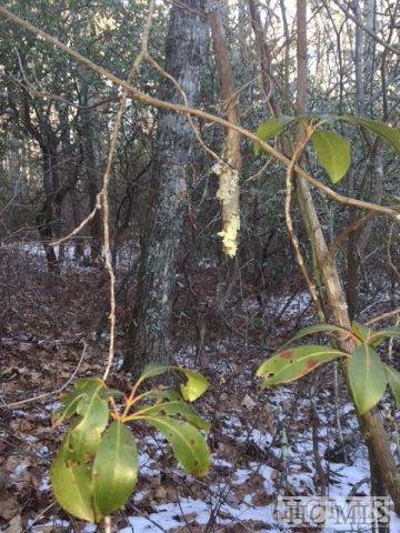 N/A Deer Run Road, Highlands, NC 28741 (MLS #89817) :: Berkshire Hathaway HomeServices Meadows Mountain Realty