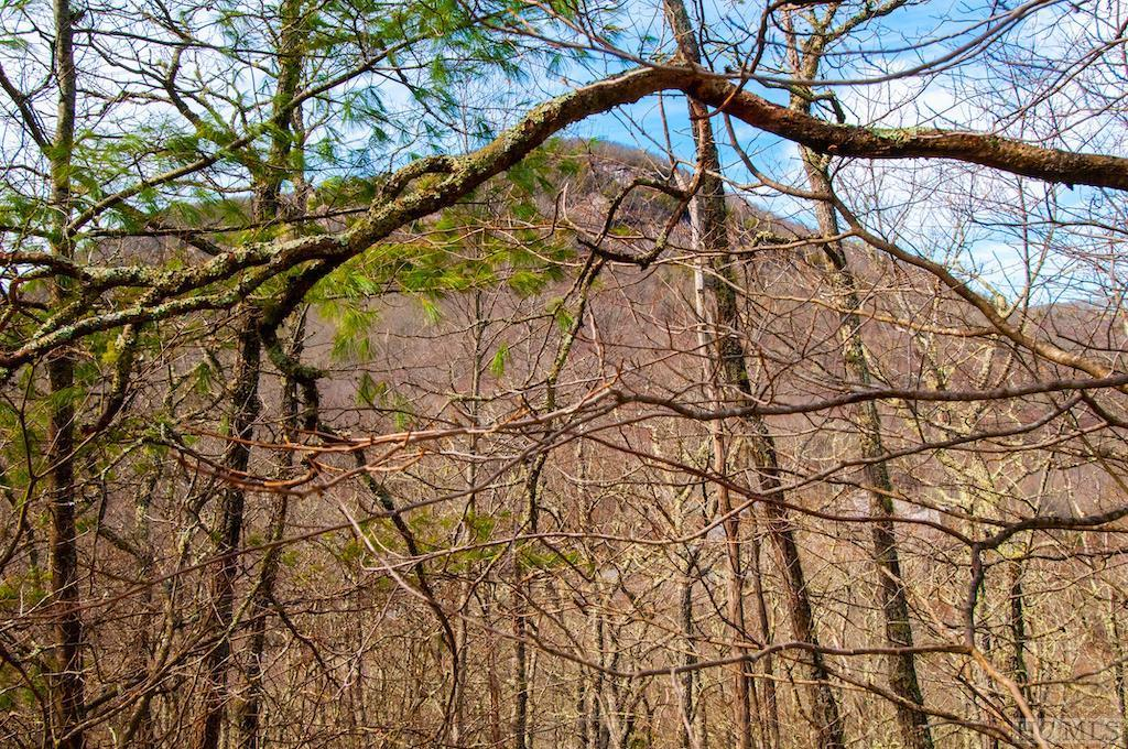 148 Forest Edge Lane - Photo 1