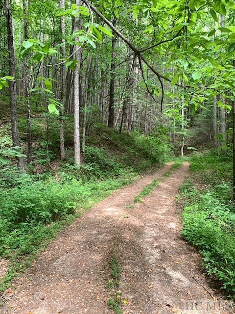 TBD Cedar Wood Drive - Photo 1