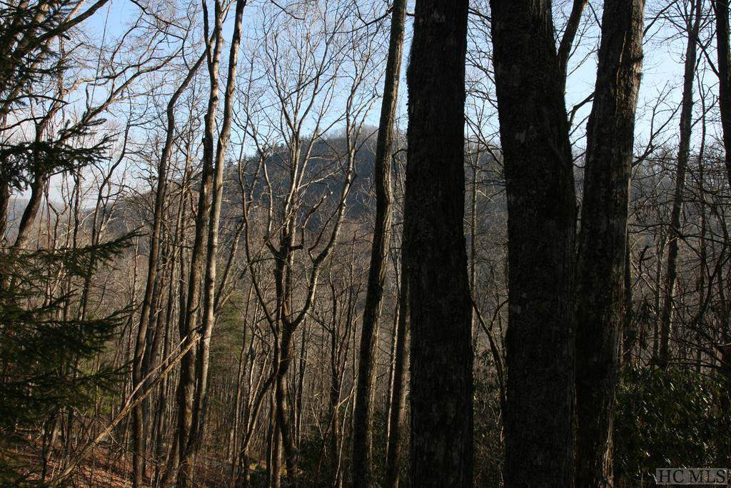 TR2 Sassafras Ridge - Photo 1