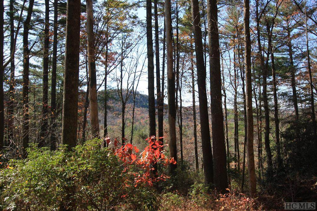 4 Pine Forest - Photo 1