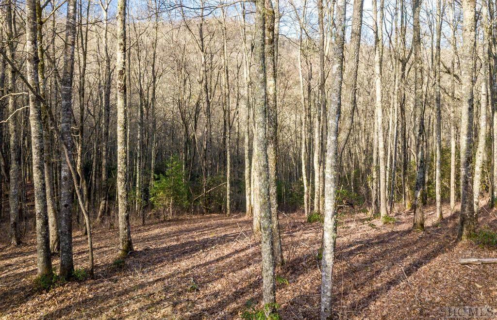 Lot 104 Crippled Oak Trail - Photo 1