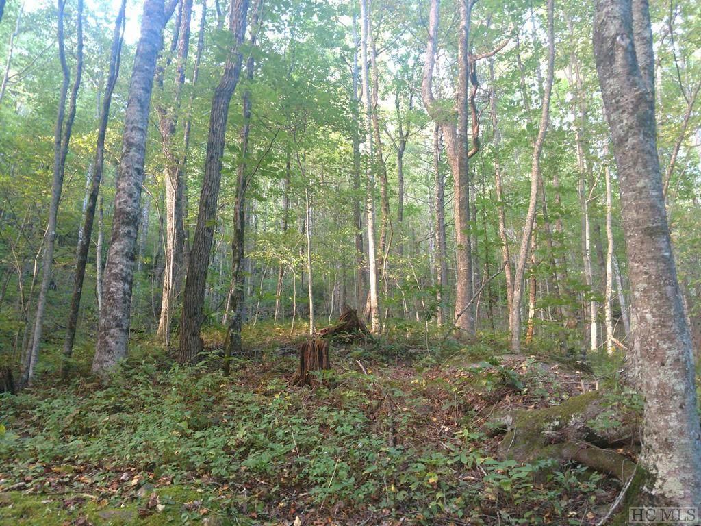 Lot 25 Cherokee Trace - Photo 1
