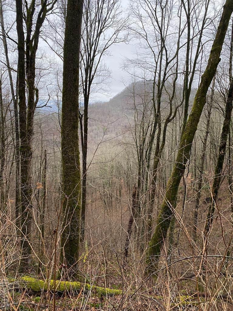 Lot53/54 Parachute Ridge - Photo 1