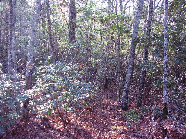 27 Wildberry Lane, Cullowhee, NC 28723 (MLS #73983) :: Lake Toxaway Realty Co