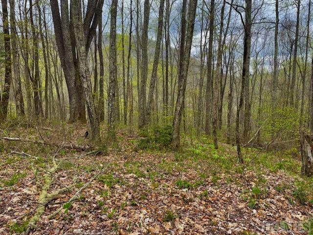 60/60A Aster Trail - Photo 1