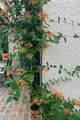 2000 61st Terrace - Photo 36