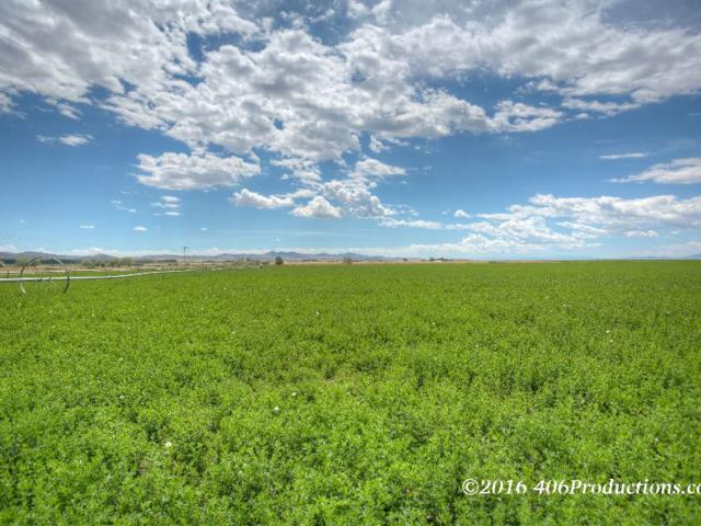 TBD Rauser Ln, Toston, MT 59634 (MLS #296219) :: Andy O Realty Group