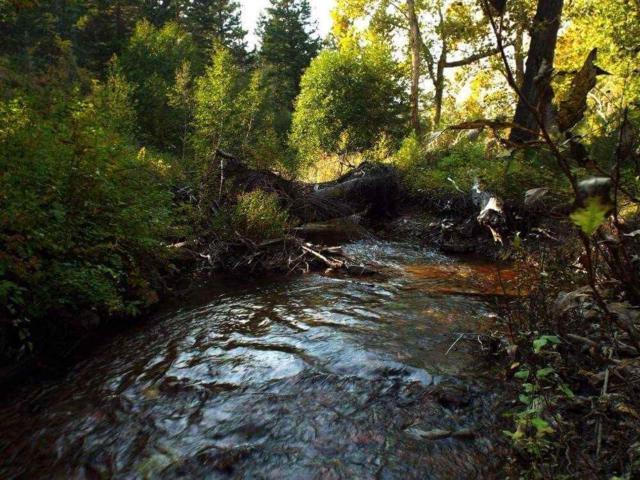 2011 Lyons Creek, Wolf Creek, MT 59648 (MLS #302152) :: Andy O Realty Group