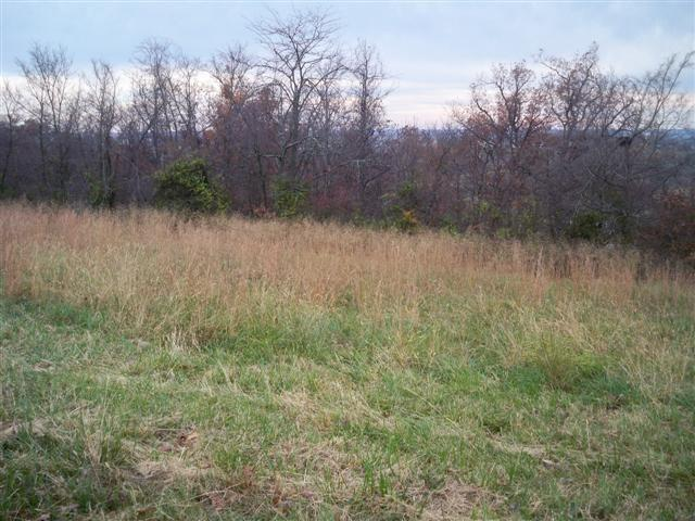 00 Blueberry Hill Lot #29, Sturgis, KY 42459 (MLS #2015436) :: The Harris Jarboe Group