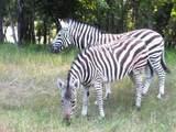 Lot 218 Safari Shores - Photo 17