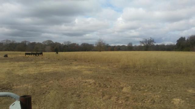 8264 Hwy 198, CANTON, TX 75103 (MLS #87164) :: Steve Grant Real Estate