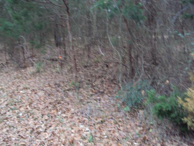 812 Dogwood Drive, MURCHISON, TX 75778 (MLS #87244) :: Steve Grant Real Estate