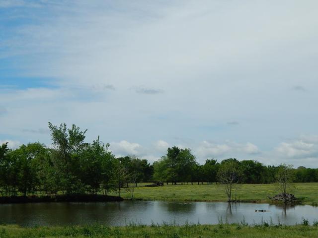 TBD Cr 3802, MURCHISON, TX 75778 (MLS #88396) :: Steve Grant Real Estate