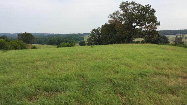 5146 Saddle Ridge, ATHENS, TX 75752 (MLS #77551) :: Steve Grant Real Estate